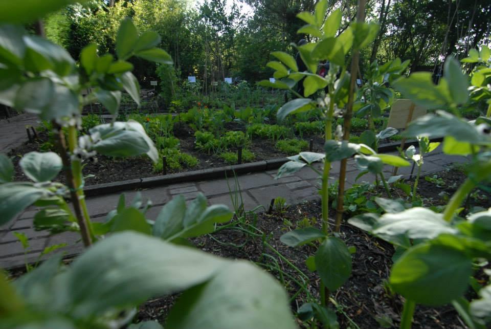 cityplot educational garden