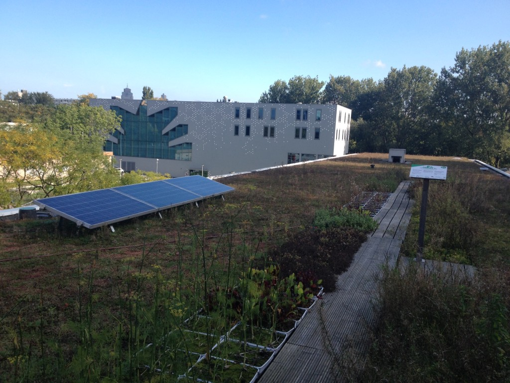 The Polderdak is a green roof with an increased capacity for water absorption